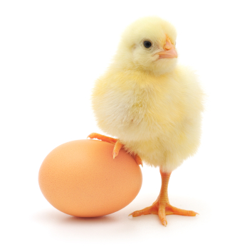 Chick+and+Egg
